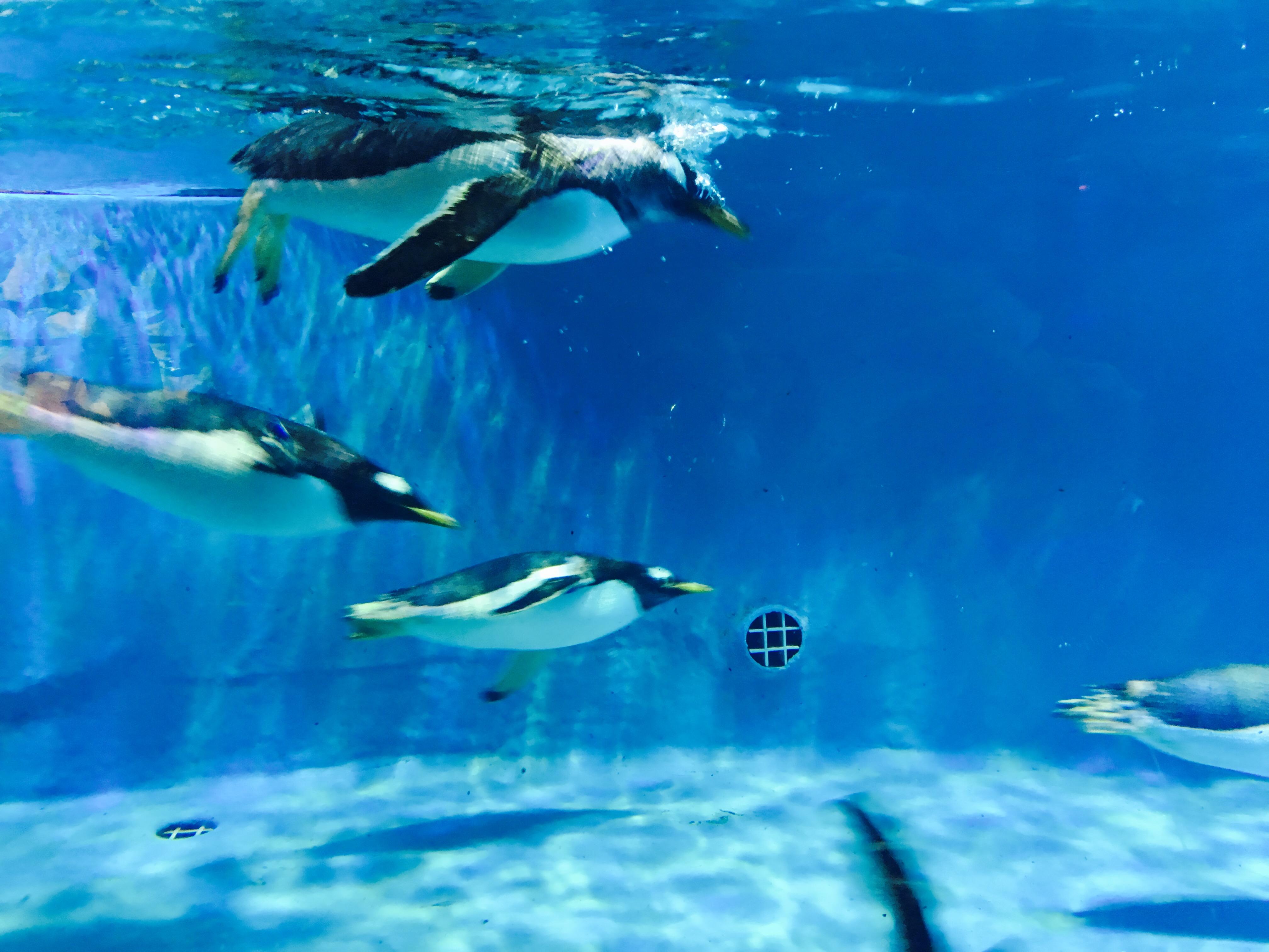 正佳极地海洋世界